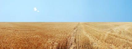 Campos de trigo de oro panorámicos Imagen de archivo libre de regalías