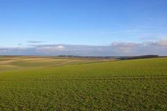 Campos de trigo do inverno Foto de Stock