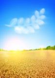 Campos de trigo dourados foto de stock
