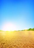 Campos de trigo dourados fotografia de stock