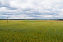 Campos de trigo e de nuvens pesadas Fotografia de Stock Royalty Free