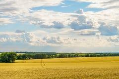 Campos de trigo em um dia de verão ensolarado brilhante Liso sob um céu nebuloso Fotos de Stock Royalty Free