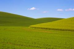Campos de trigo en el Palouse imagenes de archivo