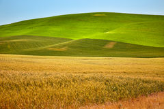 Campos de trigo Palouse do verde amarelo Washington Fotos de Stock