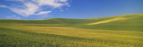 Campos de trigo, S e washington imagens de stock royalty free