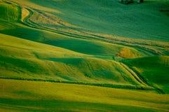Campos de trigo verdes imagens de stock royalty free