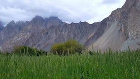 Campos de trigo verdes bonitos no tempo chuvoso nas montanhas filme