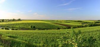 Campos de trigo verdes en la puesta del sol con el cielo despejado azul Imágenes de archivo libres de regalías