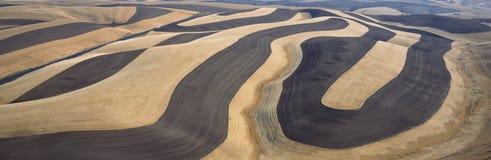 Campos de trigo y contorno que cultivan, S e washington imagen de archivo libre de regalías
