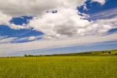 Campos de trigo y nubes, Apulia, Italia Imagen de archivo libre de regalías