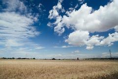 Campos de trigo y paisajes de oro Fotos de archivo
