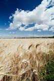Campos de trigo y paisajes de oro Fotografía de archivo libre de regalías