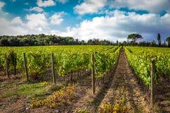 Campos de uvas en el otoño Imagen de archivo libre de regalías