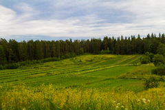 Campos de Valaam Foto de archivo libre de regalías
