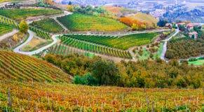 Campos de viñedos en colores del otoño en Piamonte Italia del norte foto de archivo libre de regalías