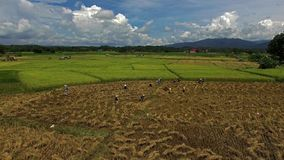 Campos del arroz almacen de metraje de vídeo