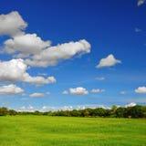 Campos del arroz. Fotografía de archivo libre de regalías