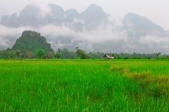 Campos del arroz Fotos de archivo