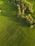 Campos del arroz, Bali, Indonesia imagen de archivo libre de regalías