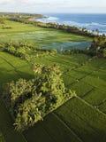 Campos del arroz, Bali, Indonesia imagenes de archivo