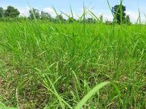 Campos del arroz con cierre del agua para arriba Imagen de archivo