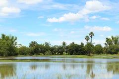 Campos del arroz con el cielo azul Imagen de archivo
