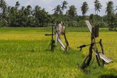 Campos del arroz con la máquina del abastecimiento de agua Palmeras de los Cocos Foto tropical del viaje de la naturaleza Imágenes de archivo libres de regalías