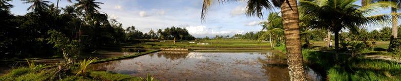 Campos del arroz de Bali Imágenes de archivo libres de regalías