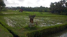 Campos del arroz de Bali Indonesia Fotos de archivo libres de regalías