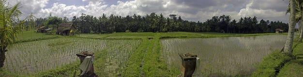Campos del arroz de Bali Indonesia Imagenes de archivo
