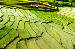 Campos del arroz de la terraza Imagenes de archivo