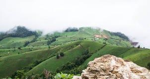 Campos del arroz de la terraza Imagen de archivo