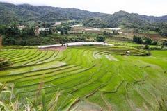 Campos del arroz de la terraza Foto de archivo libre de regalías