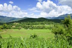 Campos del arroz de la terraza con el cielo azul Fotos de archivo