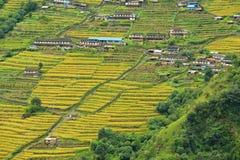 Campos del arroz de la terraza en Nepal Fotografía de archivo