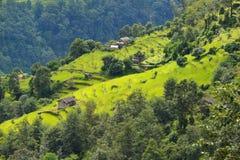 Campos del arroz de la terraza en Nepal Imagen de archivo