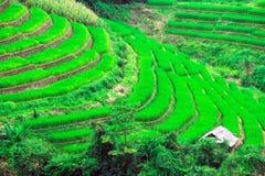 Campos del arroz de la terraza, septentrionales de Tailandia Imagenes de archivo