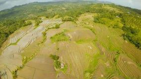 Campos del arroz de las Filipinas La isla de Bohol Pablacion Anda imagen de archivo