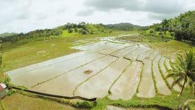 Campos del arroz de las Filipinas La isla de Bohol Pablacion Anda foto de archivo