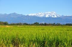 Campos del arroz de Piedmont Foto de archivo