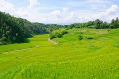 Campos del arroz de Yokone Imagen de archivo libre de regalías