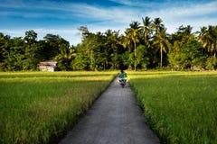 Campos del arroz en la puesta del sol - Donsol Filipinas Fotografía de archivo