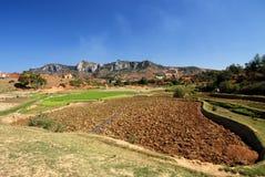 Campos del arroz en Madagascar foto de archivo