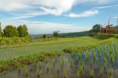 Campos del arroz en Munduk en Bali Foto de archivo