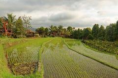 Campos del arroz en Munduk en Bali Imagenes de archivo
