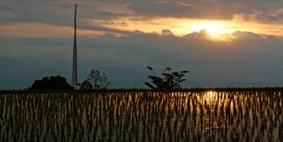 Campos del arroz en Munduk en Bali Imágenes de archivo libres de regalías