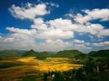 Campos del arroz en otoño Fotografía de archivo libre de regalías