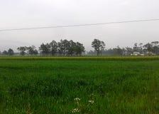 Campos del arroz en pueblo chino foto de archivo libre de regalías