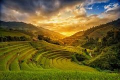 Campos del arroz en terraza imagen de archivo