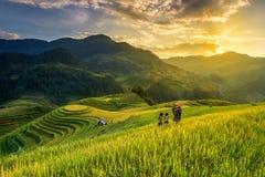 Campos del arroz en terraza fotos de archivo